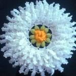 beyaz çiçek modelinde sabun bezi örneği