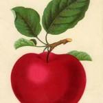 elma desenli dekupaj resmi