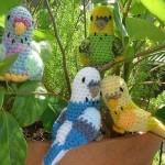 çeşit çeşit örgü muhabbet kuş modelleri
